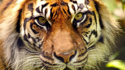 Shocking: 10 Animals That May Go Extinct In The Next 10 Years