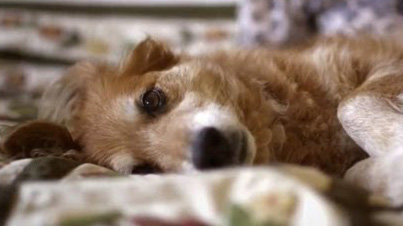 Incredible: Dog Saves Owner's Life By Smelling Her Cancer