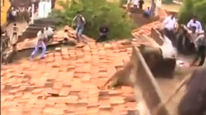 Caught on Film: Leopard On Rooftop Attacks Residents In India Before Hiding In Bathroom