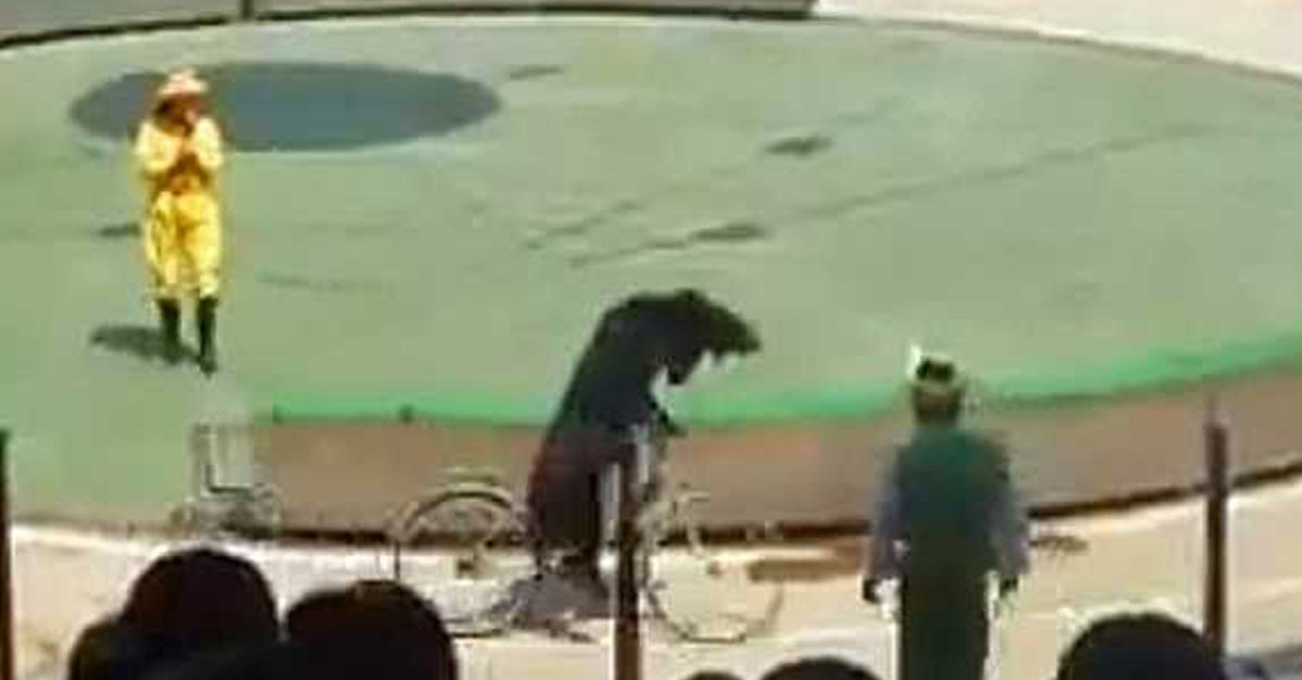 WTF Clip Of The Week: Bear Attacks Monkey In Bike Race In China