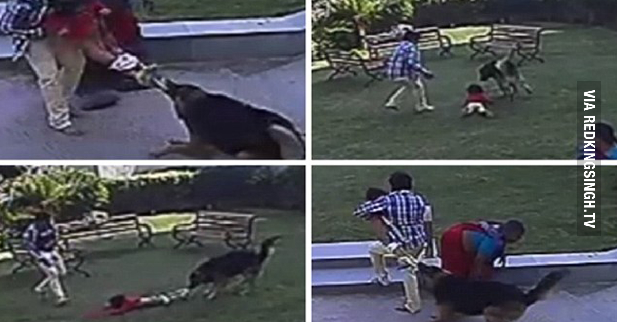 Just Another Day In India 10 Year Old Boy Saves His Baby Sister From A Hungry German Shepherd