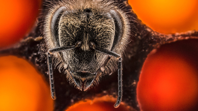 The First 21 Days Of A Bee's Life