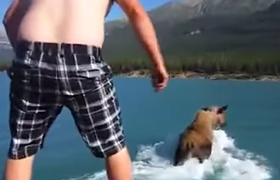 Meanwhile In Canada: Drunk Man Jumps On The Back Of A Moose And Rides It