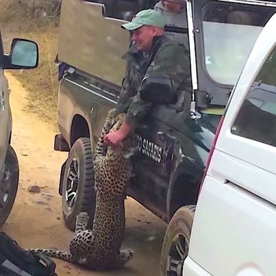 Leopard Attacks Safari Guide In South Africa (*Warning* Graphic Footage)