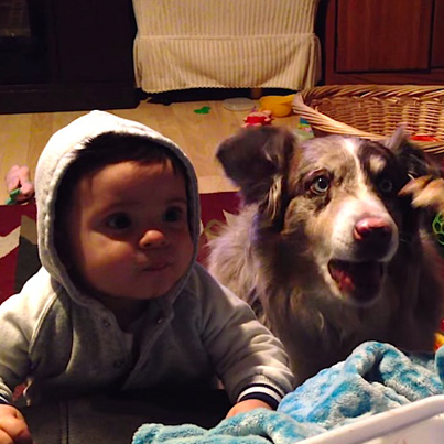 Ambitious Dog Is Smarter Than Baby
