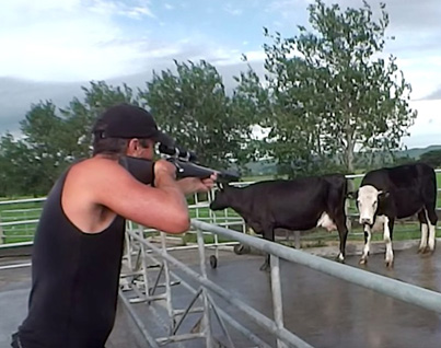 The Most Humane Way To Kill A Cow For Steak (*Warning* Graphic)