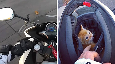 Hero Motorcyclist Saves Kitten From Being Run Over