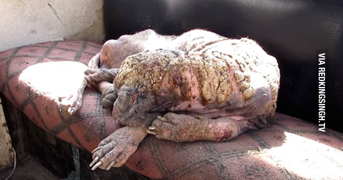 Homeless Dog In India Suffering From A Skin Disease Makes