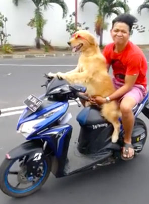 Coolest Dog On The Planet Makes His Owner Ride B*tch