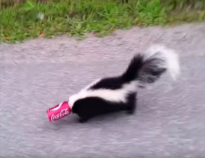 Man Rescues A Skunk With His Head Stuck Inside A Can 😅