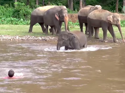 Elephant Helps Man Who He Thinks Is In Trouble 🙌🙌