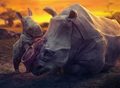 Tearjerking Animation Takes A Look Into The Lives Of 4 Endangered Animals