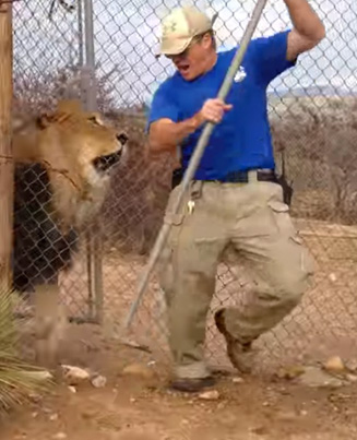 Lion Scares The Sh*t Out Of A Zookeeper 😂😂😂