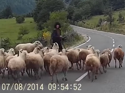 Angry Sheep Brutally Attacks Old Female Shepard 🐑🐑😂😂