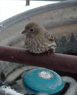 Man Uses His Breath To Free A Sparrow Frozen To A Fence ❄️