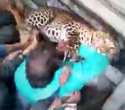 Wild Leopard Attacks Several People In India 😱😱😱
