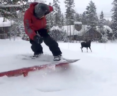 Pissed Off Moose Charges At A Snowboarder 🏂💀💀