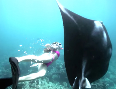 Free Diving With A Gigantic Manta Ray 🙏🙏🙏