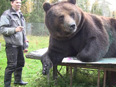 This Bear's Paintings Are So Good That He Was Given His Own Art Show 🙌🔥🙌