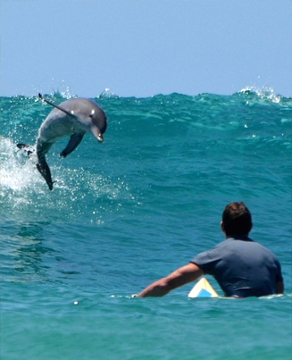 Surfer Gets The Shock Of His Life When A Dolphin Slams Into Him 😂😂😂
