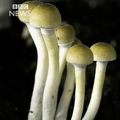FOR THE LOVE OF 'SHROOMS
