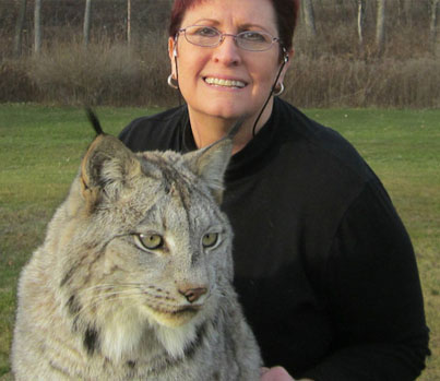 Huge Canadian Lynx Acts Like A Loveable House Cat 😻😻😻