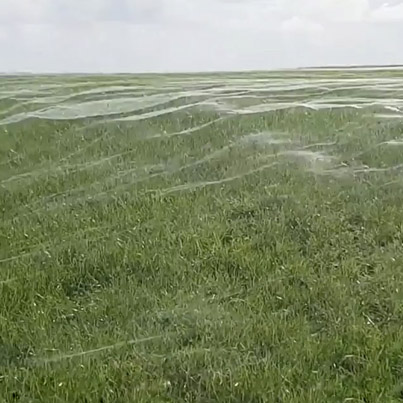 Millions Of Spiders Fleeing Floods Embellish Land With Monster Webs 😳🕷🕸