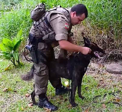 Police Sniffer Dog Tracks A Robber Hiding In A Swampy Lagoon 🙏🙏🙏