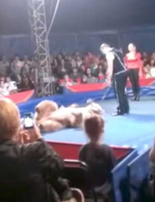 Bear Gets Sick Of Doing Stupid Tricks And Jumps Into Crowd At Ukrainian Circus 💀💀💀