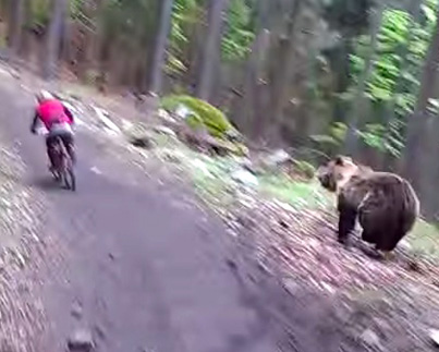 Mountain Bikers Have Close Call With Charging Bear 😱😱😱