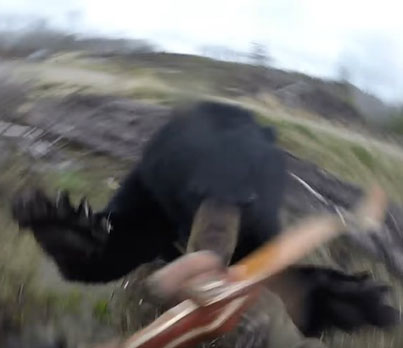 HUNTER BECOMES HUNTED: BASHES BEAR TO SURVIVE