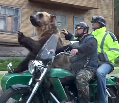 Only In Russia: Giant Bear Rides Shotgun On A Motorcycle