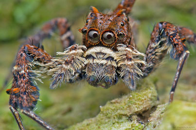 This Tiny Spider Has Three Superpowers 😱😱😱
