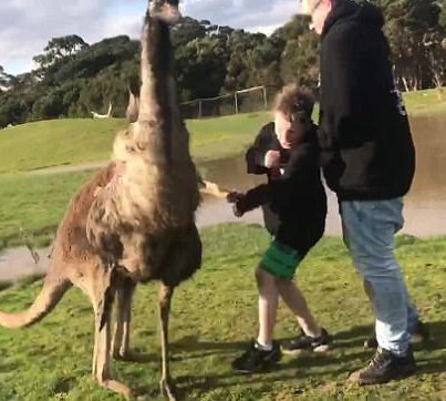 Kangaroo Punches A Boy In The Face While Trying To Feed An Emu 😭😭😭