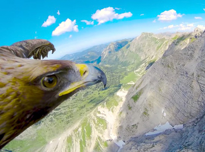 Make This Soaring Eagle Your Spirit Animal 🙏🙏🙏