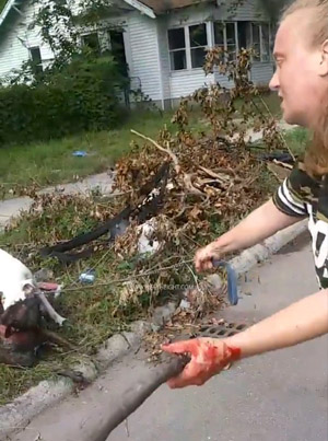 Pit Bull Protects His Owner After Another Dog Tries To Attack Her 😱😱😱