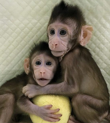 Humans Up Next: Monkeys Cloned For The First Time Ever
