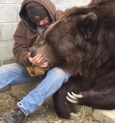 Man Snuggles With A Friendly Bear Whose Head Is Bigger Than His Whole Body 😍🙏❤️