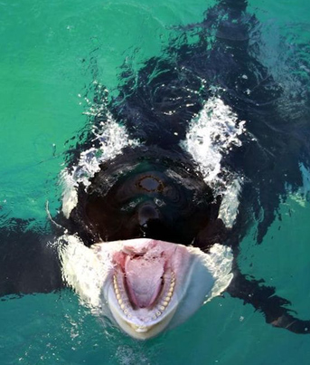 Worlds First Killer Whale Learns How To Mimic Human Speech 😱😱😱