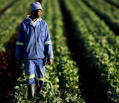 South Africa Parliament Votes To Confiscate Land From White Farmers 😓😓😓