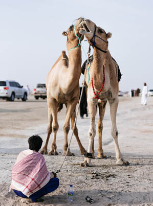 The Camels Of Arabia (VICE Documentary) 🐪🐪🐪