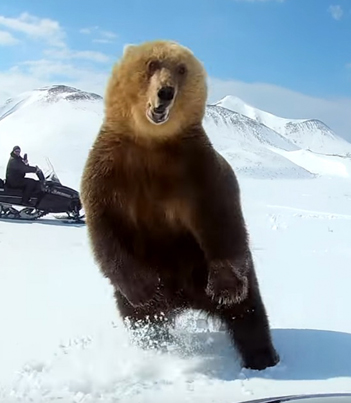 Snowmobilers Encounter A Massive Bear And Almost Get Attacked 😱😱😱