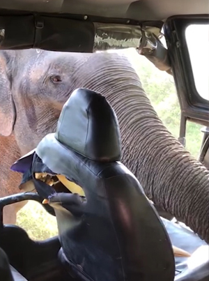 Tourists Fear For Their Lives As Elephant Attacks Their Safari Jeep 😱😱😱