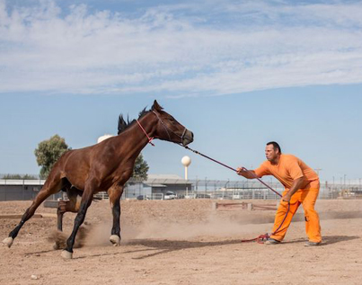 A Haunting Short About Prison Inmates Who Spend Their Days Breaking Wild Horses 🐴🤔