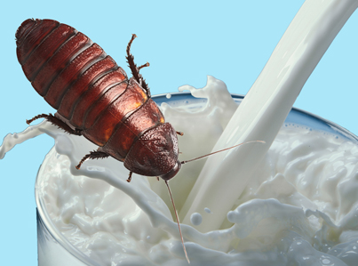Screw That: Cockroach Milk Is The Latest Superfood Trend 😷