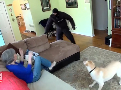 Dogs Tested To See Whether They'd Defend Owner During Home Invasion 😩😩💀