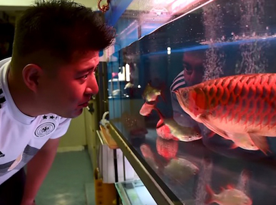 Fishing For Perfection: Cosmetic Surgery For Fish 🐟