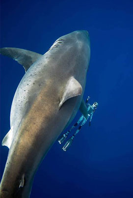 World's Biggest Great White Shark Found Near Hawaii 😱👀