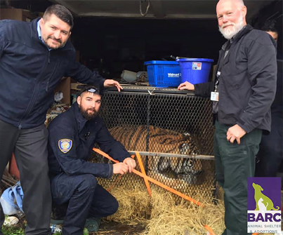 Man Smoking Weed Finds Tiger In Abandoned House 😂😂😂