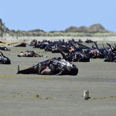 Hundreds Of Dead Whales Washed Up On The Shore 😱👀